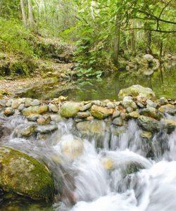 el-bosque-ruta-de-los-pueblos-blancos