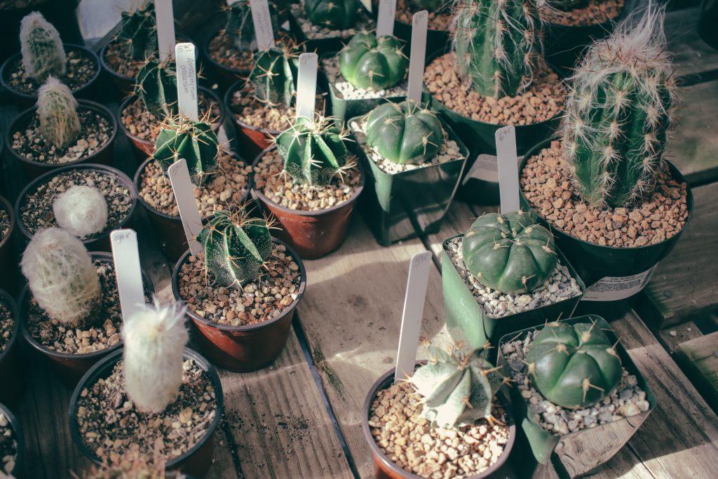 Sitio tranquilo Semana Santa: Vivero de cactus y otras especies de plantas xerófilas